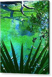 Florida Swamp With Driftwood Acrylic Print