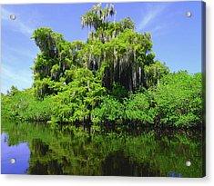 Florida Swamps Acrylic Print