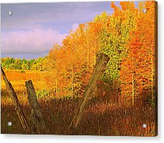 Acrylic Print featuring the photograph Florida Wetlands  by David Mckinney