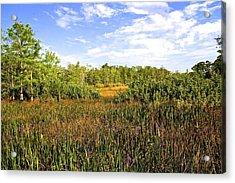 Florida Wetlands Acrylic Print