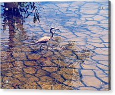Acrylic Print featuring the photograph Florida Wetlands Wading Heron by David Mckinney