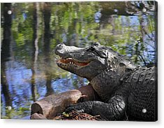 Florida - Where The Alligator Smiles Acrylic Print