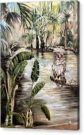 Florida's Barred Owl Acrylic Print