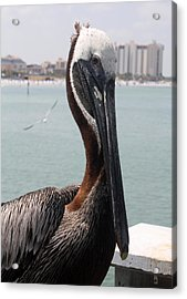 Acrylic Print featuring the photograph Florida's Finest Bird by David Nicholls
