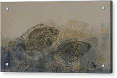 Flounder Duo Acrylic Print by Nancy Gorr