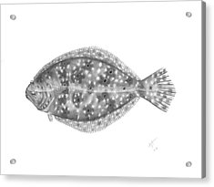 Flounder - Scientific Acrylic Print