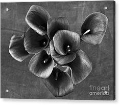 Flower #248 Acrylic Print