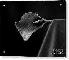 Flower #305 Acrylic Print