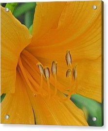 Flower 102 Acrylic Print by Patsy Pratt