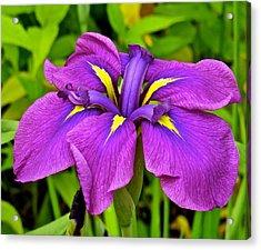 Iris 106 Acrylic Print by Patsy Pratt