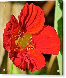 Flower 123 Acrylic Print by Patsy Pratt