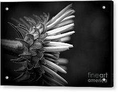 Flower 58 Acrylic Print