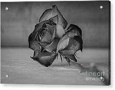 Flower #609 Acrylic Print
