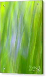 Flower Abstract Acrylic Print by Kelly Morvant