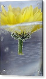 Acrylic Print featuring the photograph Flower Afloat by Adria Trail