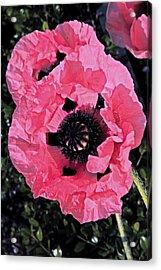 Flower Alone Acrylic Print by Will Burlingham