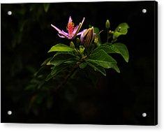 Flower And Bud Acrylic Print by Noel Elliot