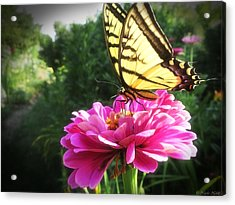 Flower And Butterfly Acrylic Print