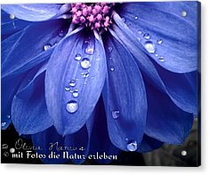 Flower And Drops Acrylic Print by Olivia Narius