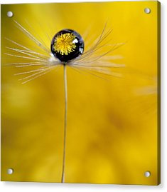 Flower And Seed Acrylic Print by Aaron Aldrich