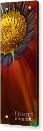 Acrylic Print featuring the photograph Flower by Andy Prendy