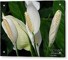 Flower Art Acrylic Print by Greg Patzer