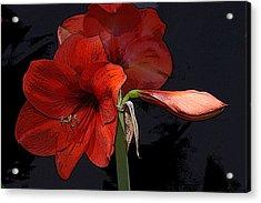Flower Art02 Acrylic Print