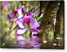 Flower Bauhinia And Simulation Of Water Acrylic Print