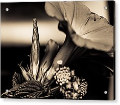 Flower Beauty II Acrylic Print by Marco Oliveira