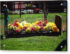 Flower Bed Acrylic Print by Holly Blunkall
