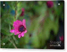 Flower Bokeh  Acrylic Print by Jordan Rusin