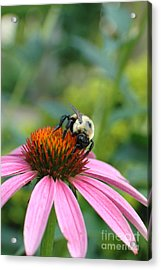 Flower Bumble Bee Acrylic Print by Jt PhotoDesign