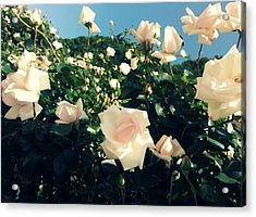 Flower Bush  Acrylic Print by Kiara Reynolds