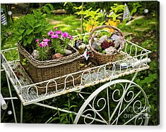 Flower Cart In Garden Acrylic Print by Elena Elisseeva