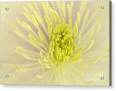 Flower Centre Acrylic Print by Svetlana Sewell