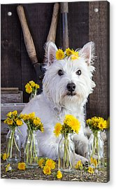 Acrylic Print featuring the photograph Flower Child by Edward Fielding