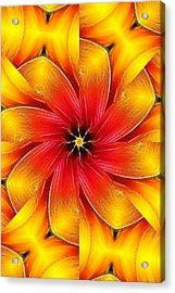 Flower Close-up--fractalius Kaleidoscope Acrylic Print