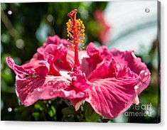 Acrylic Print featuring the photograph Flower Closeup by Yew Kwang