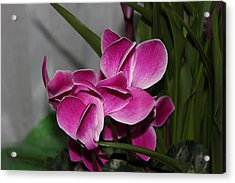 Acrylic Print featuring the photograph Flower by Cyril Maza