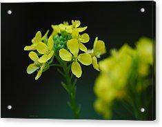 Flower Acrylic Print by Diaae Bakri