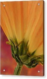 Flower Dream I Acrylic Print