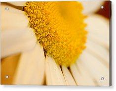 Flower Dream V Acrylic Print