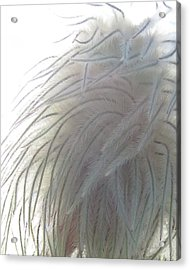 Acrylic Print featuring the photograph Floral Feathers by Ramona Johnston