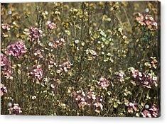 Flower Field Acrylic Print by Svetlana Sewell