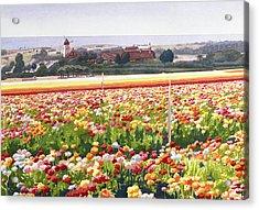 Flower Fields In Carlsbad 1992 Acrylic Print by Mary Helmreich