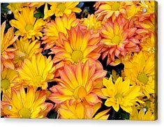 Flower  Acrylic Print by Gandz Photography