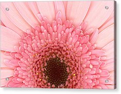 Flower - I Love Pink Acrylic Print by Mike Savad