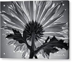 Flower IIi Acrylic Print