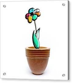 Flower In A Pot. Concept Acrylic Print