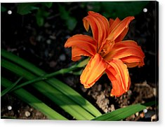 Flower In Backyard Acrylic Print